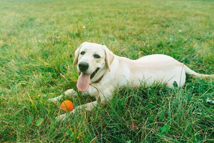Cane al parco