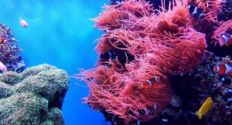 Dettaglio della barriera corallina