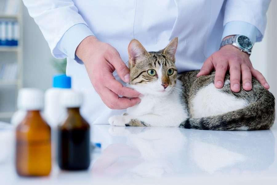 Semintra gatto telmisartan